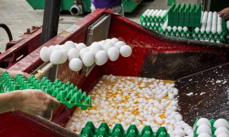 1 huevos contaminados