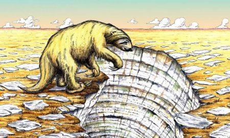 oso perezoso