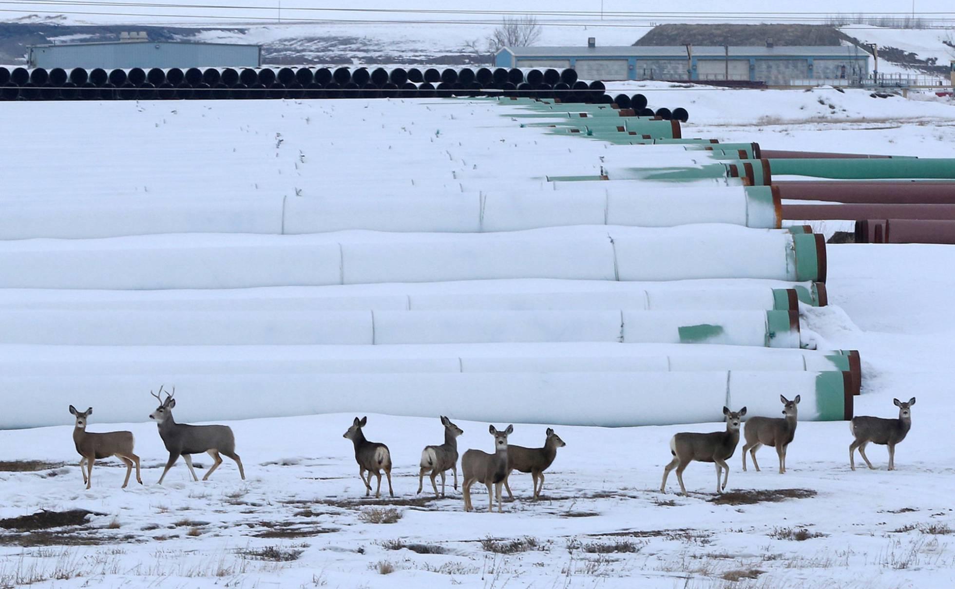 ciervos dakota del norte