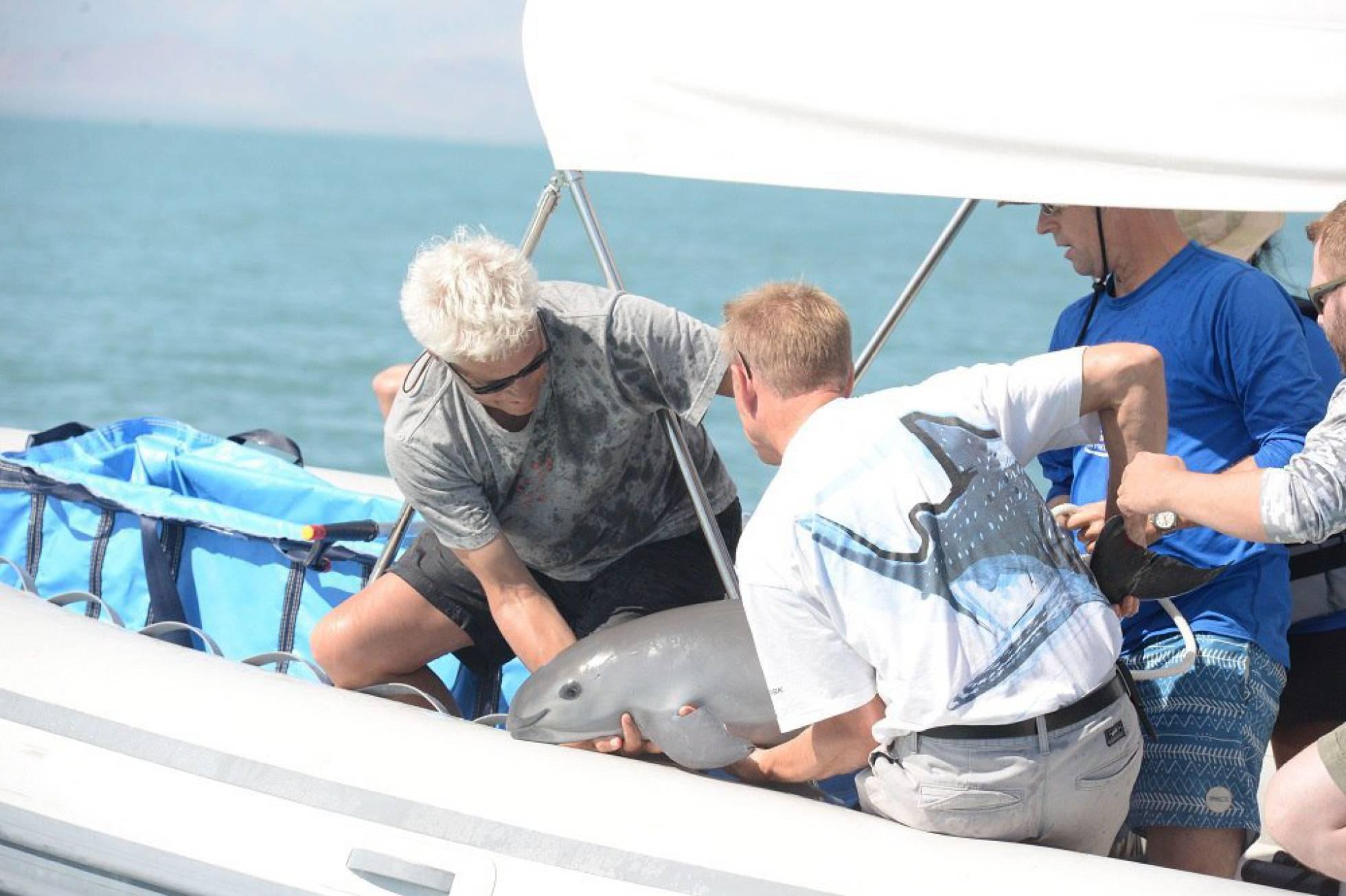expertos con vaquita marina
