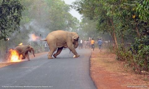 Fotografía de elefante en llamas gana concurso en la India