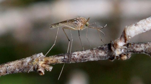 ADPH investiga varios casos de Zika y virus del Nilo Occidental entre los residentes de Alabama