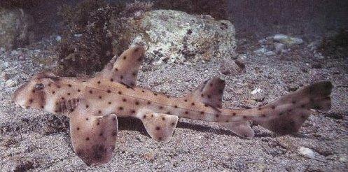 Un acuario de EE UU recupera una cría de tiburón robada y camuflada en un carrito de bebé