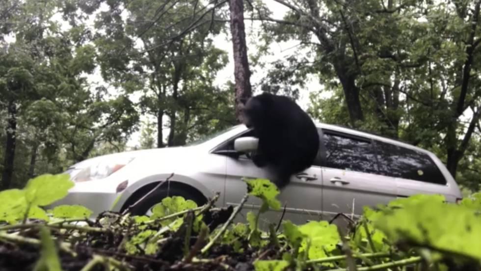 Una familia encuentra a un oso en el interior de su coche