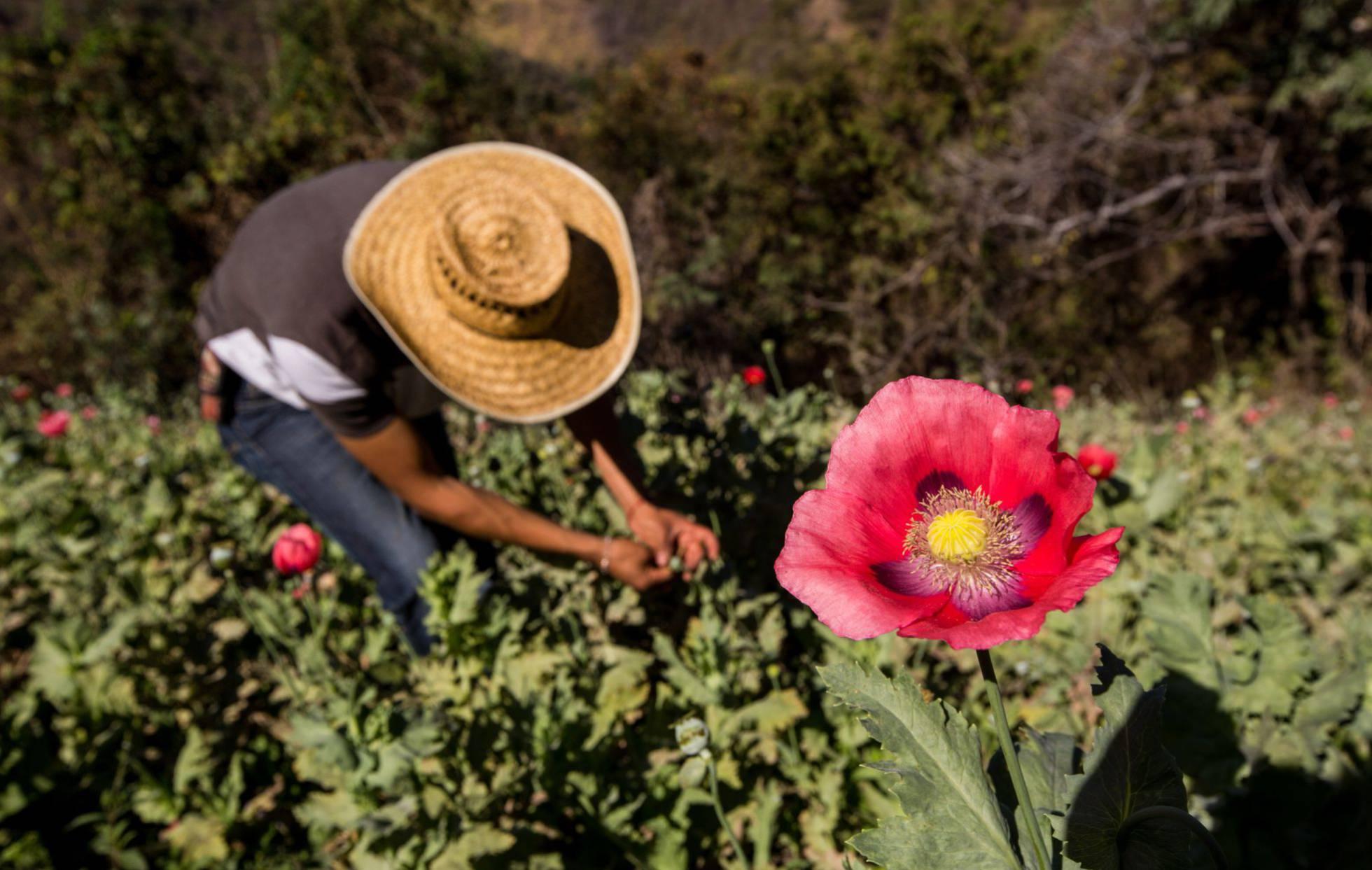 El jefe del ejército mexicano cree que la legalización de la amapola ayudaría a poner fin a la violencia