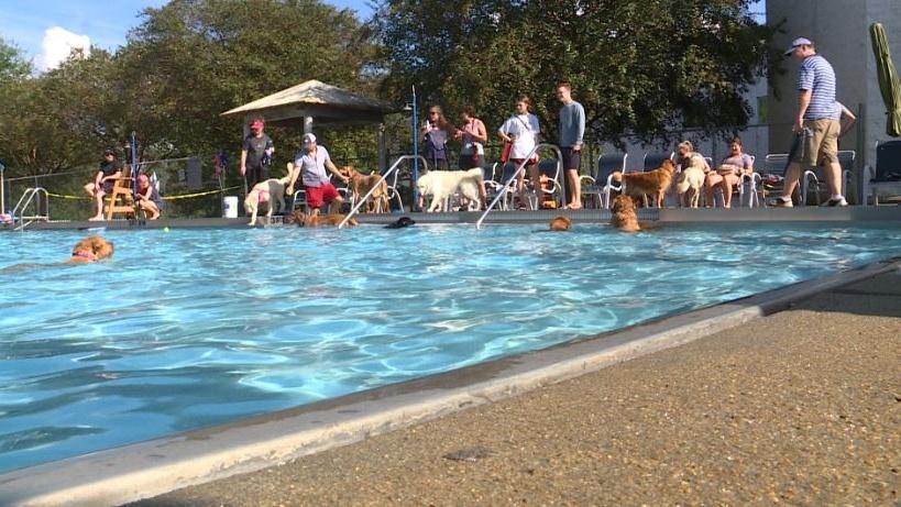 La diversión en la piscina, es para los perros en LJCC, en Birmingham