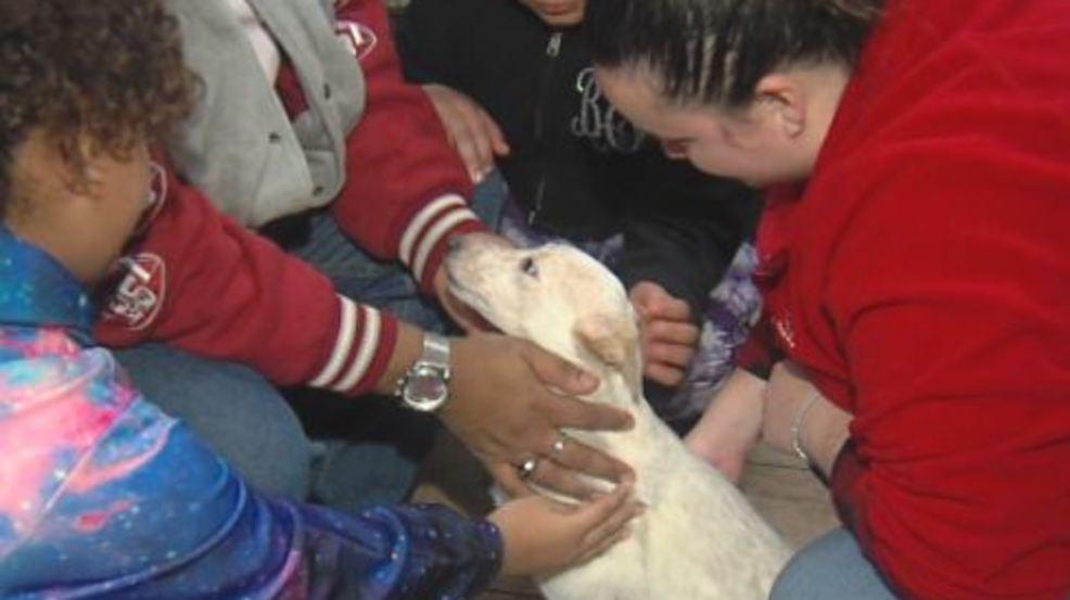 Refugio de animales de Tuscaloosa, envía animales a casa por vacaciones