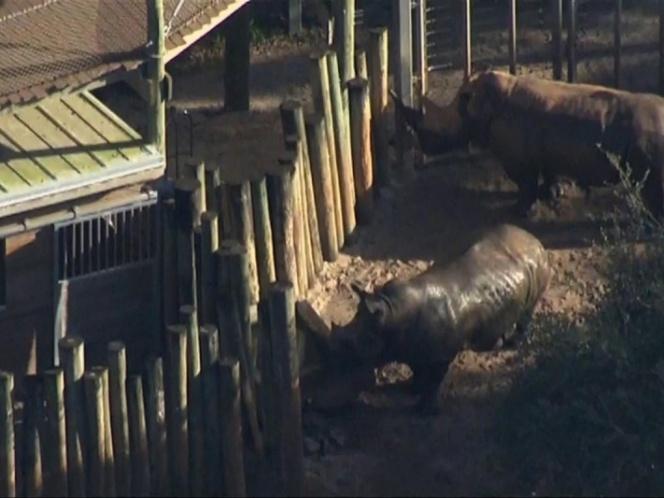 zona rinocerontes