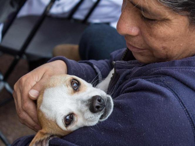 Esterilizan en Ecatepec a más de mil perros y gatos en un día