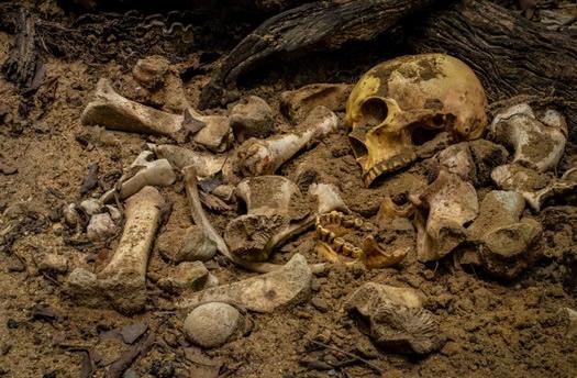 esqueleto huesos