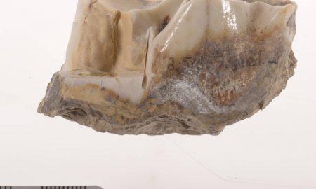 1 molar hallado