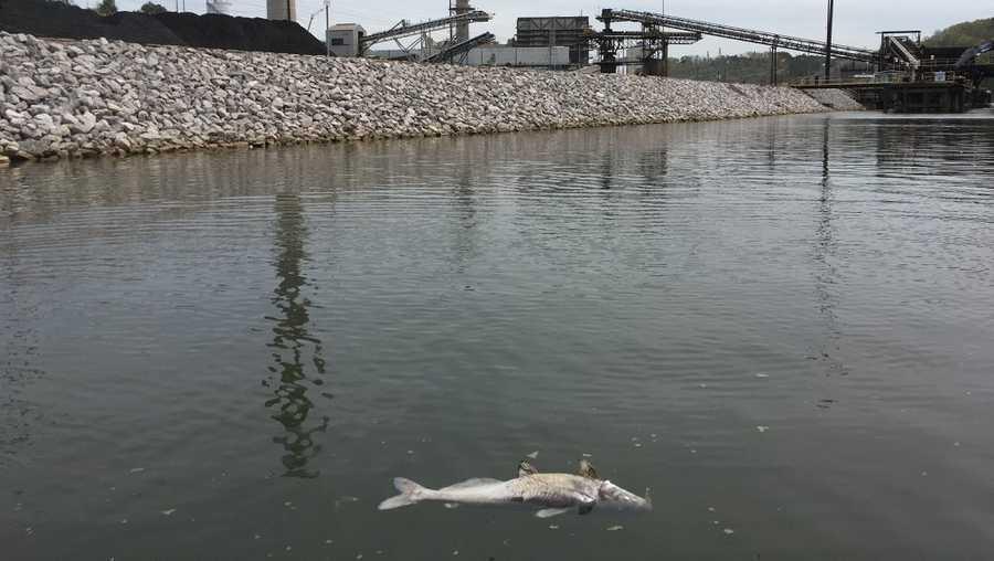 Alabama Power pagará más de $200,000 para resolver el derrame de químicos y la muerte de peces