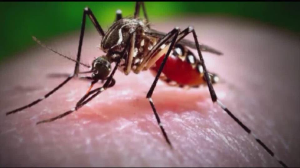 mosquito virus EEE