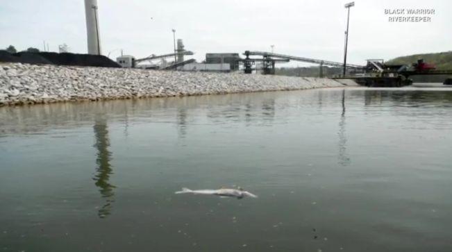 Denunciante: Empleados de Alabama Power compactaron peces muertos después de un derrame químico