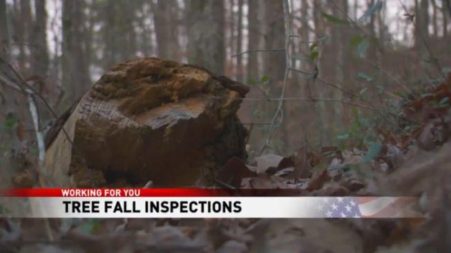 La comunidad intensifica las inspecciones, después de que un árbol cayó sobre un automóvil con adolescentes adentro