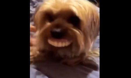 perro con dentadura humana