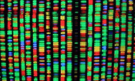 representacion digital del genoma humano