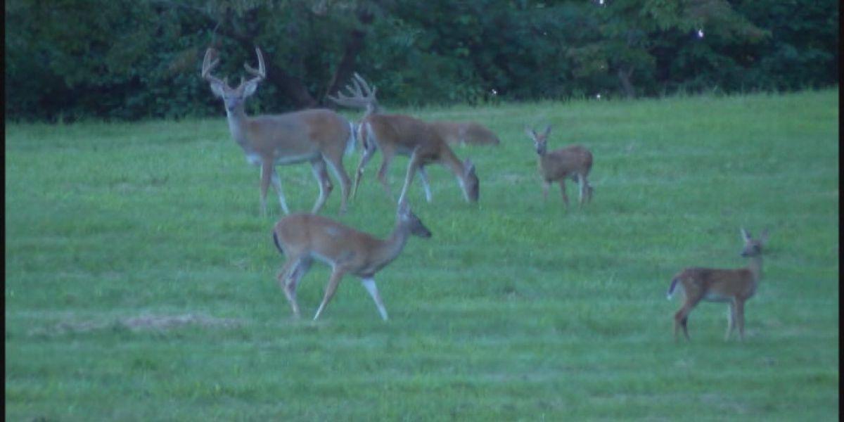 Los cambios para la temporada de caza de 2020 en Alabama incluyen nuevas zonas para los ciervos