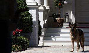 Biden se fractura pie derecho cuando jugaba con su perro