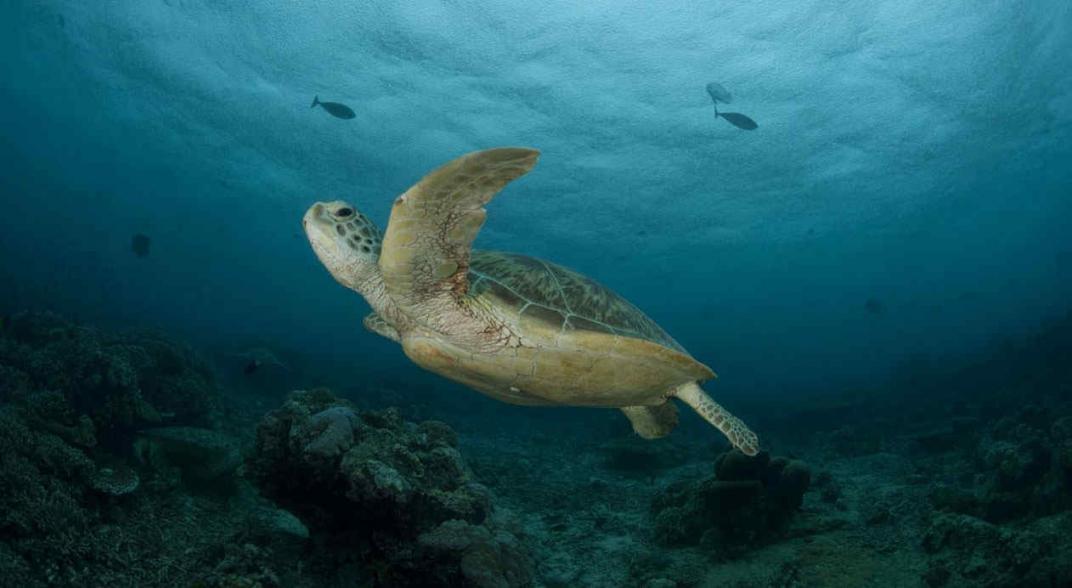 Del frío de Massachusetts a Florida: las tortugas también vuelan