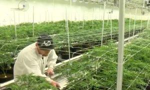 El Senado de Alabama vota 21-8 para aprobar el proyecto de ley de marihuana medicinal