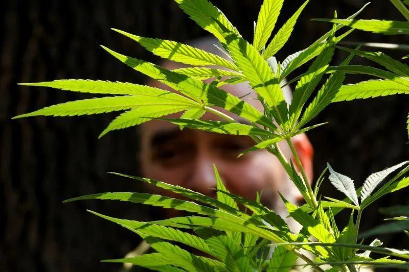 Tecnología punta y 300 millones para producir marihuana en Nuevo México