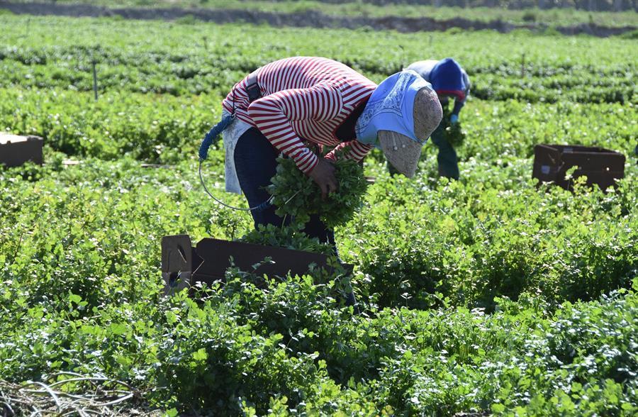 Urgen legalización de campesinos indocumentados para prevenir muertes